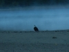 Moreau Lake - Early Morning - Eagle